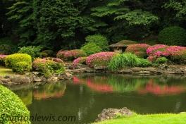 Azaleas reflection
