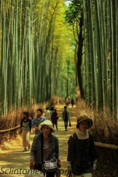 Bamboo cut through