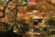 Shrine in Color