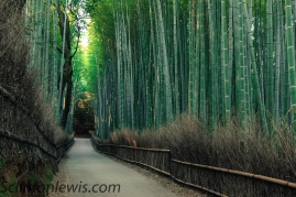 Through the bamboo grove