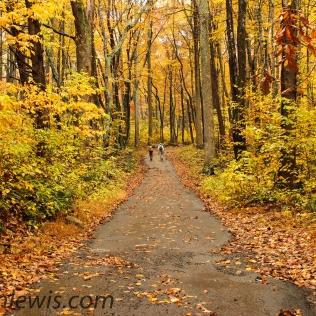 Yellow Hike
