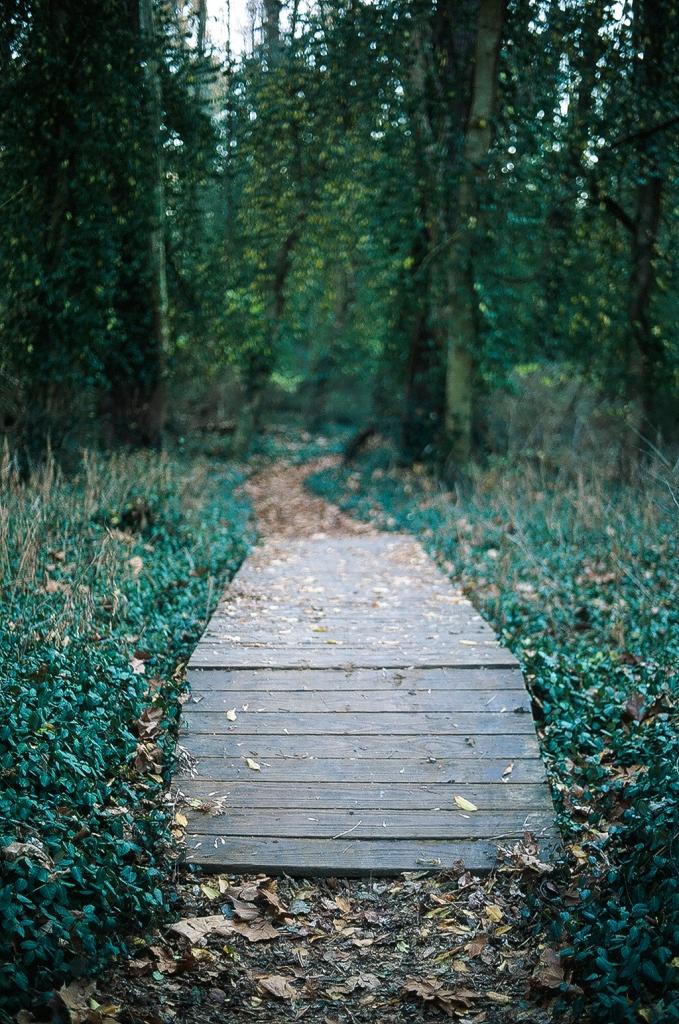 Viney walkway
